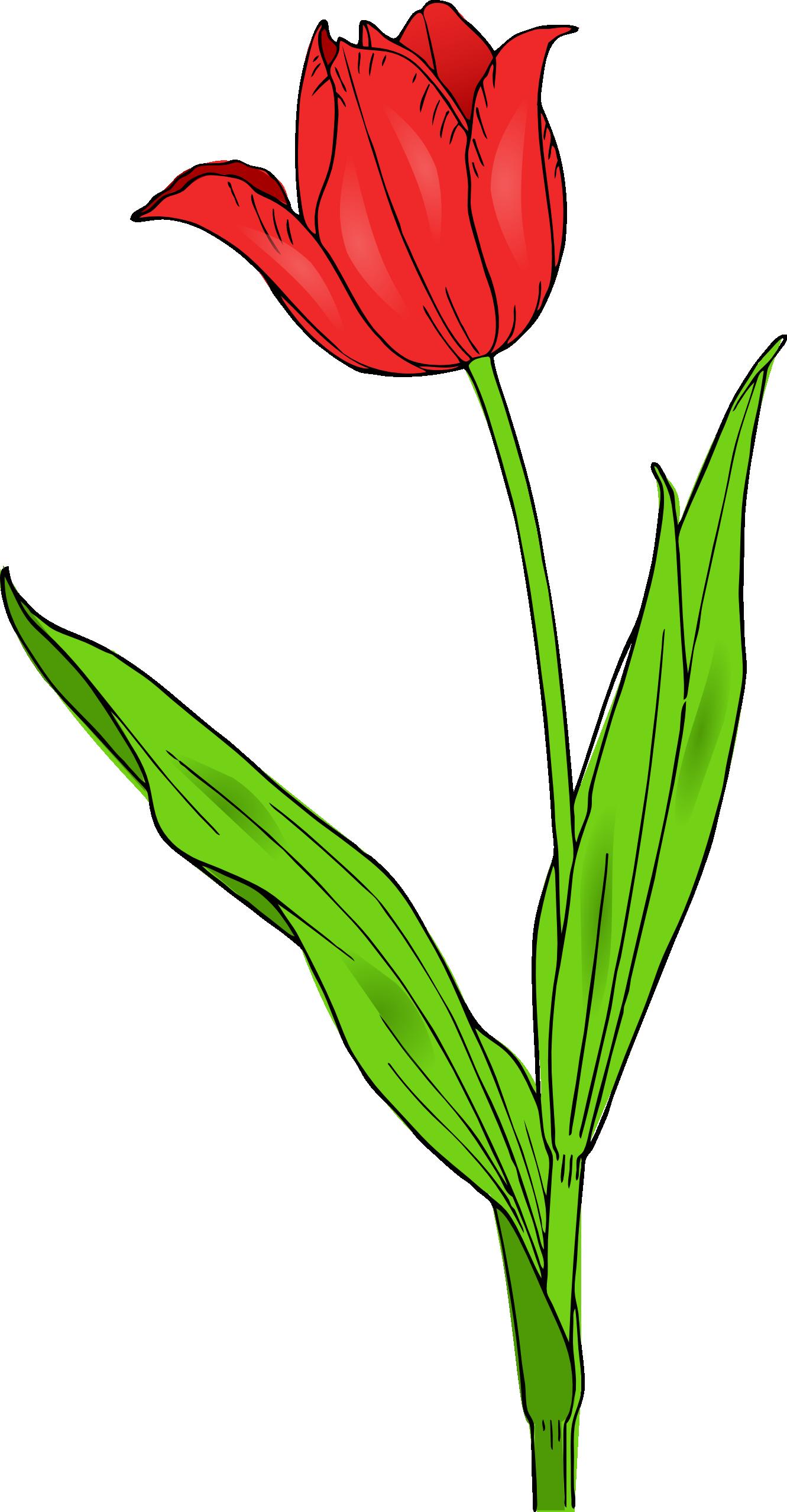 download clip art bunga - photo #40