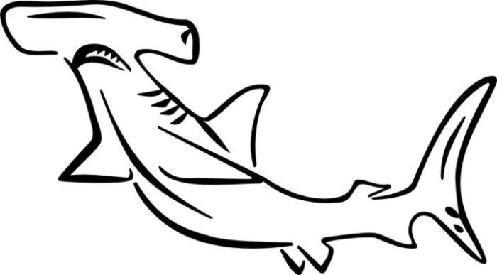 hammerhead shark cut out pattern clipart best