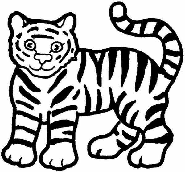 Cartoon tiger drawing clipart best for White tiger coloring pages