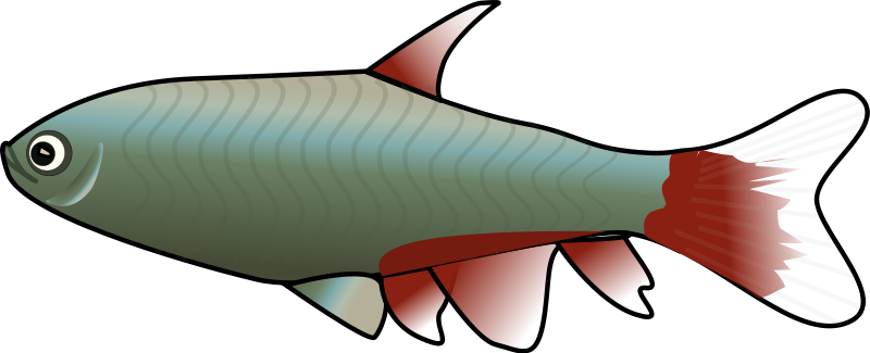 Small fish clipart clipart best for Fish clipart images