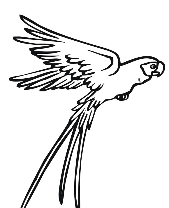 Drawing Simple Bird Fly - ClipArt Best