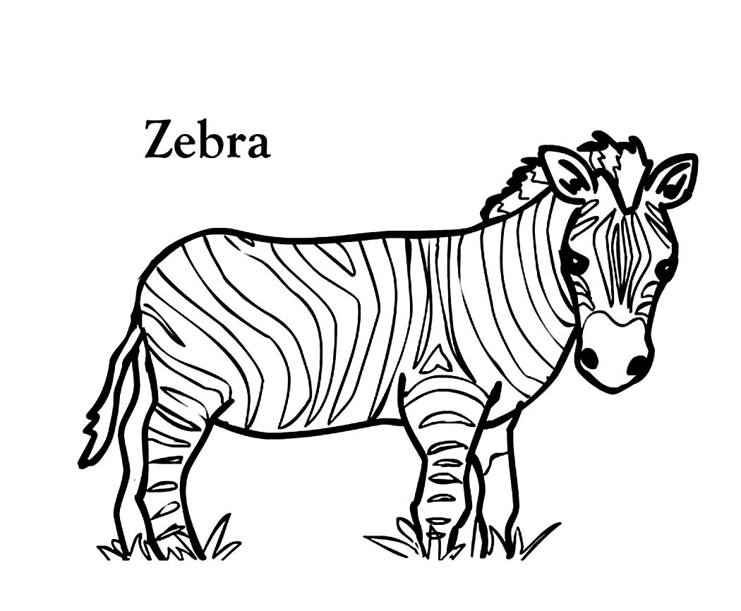 Coloring pages zebra clipart best for Zebra coloring pages to print