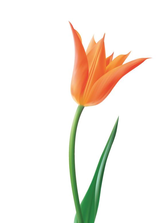 ручной росписью цветок цветы акварель фиолетовый PNG и