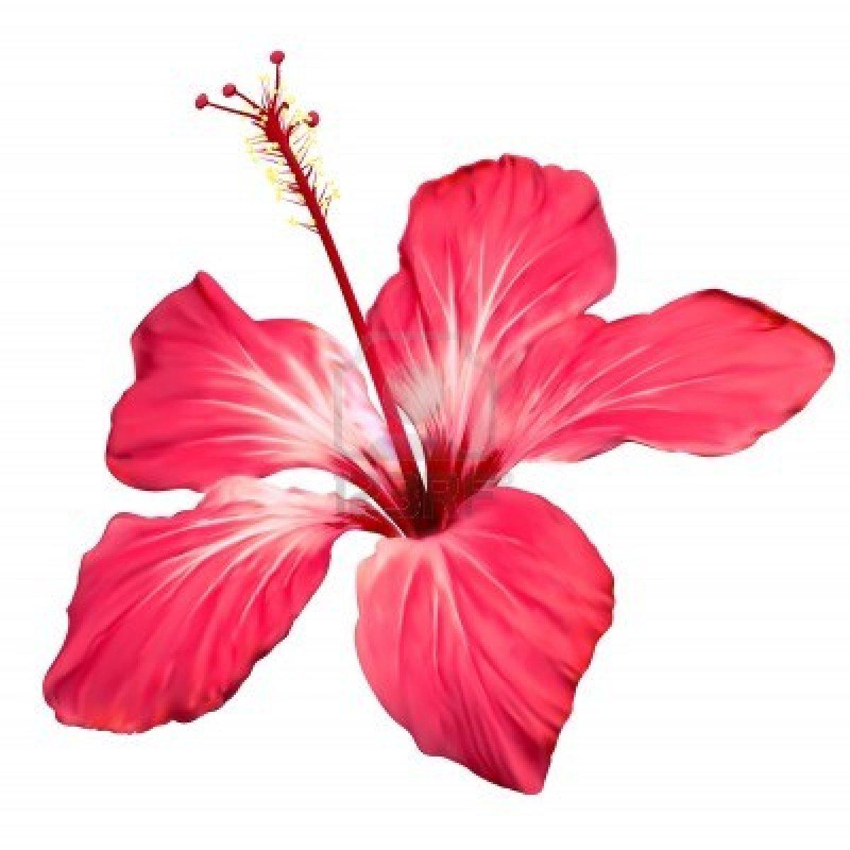 Clip Art Hawaiian Flowers - ClipArt Best