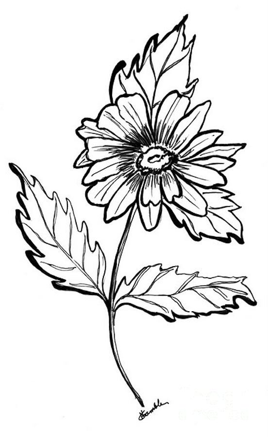 Daisy Flower Line Drawing : Daisy line drawing clipart best