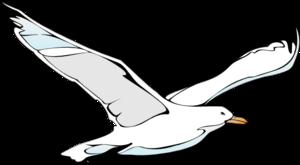 Seagull Stock Illustrations  7789 Seagull Stock