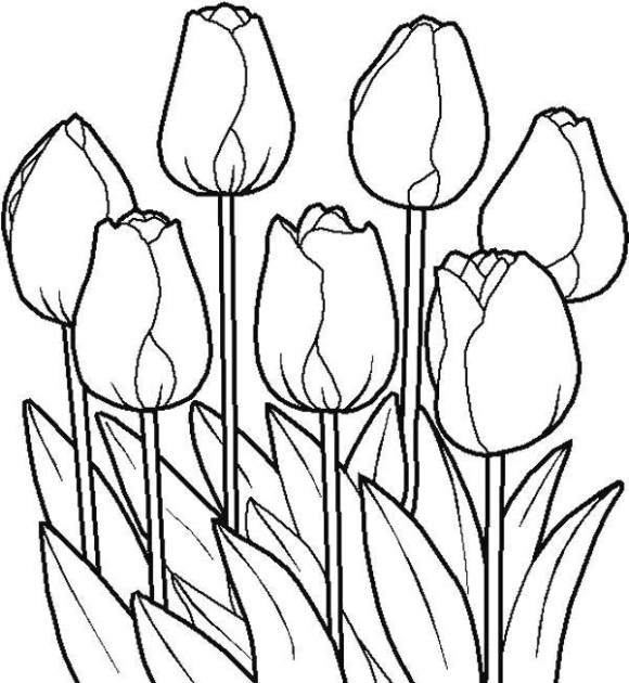 Line Drawing Tulip : Tulip flower sketch clipart best