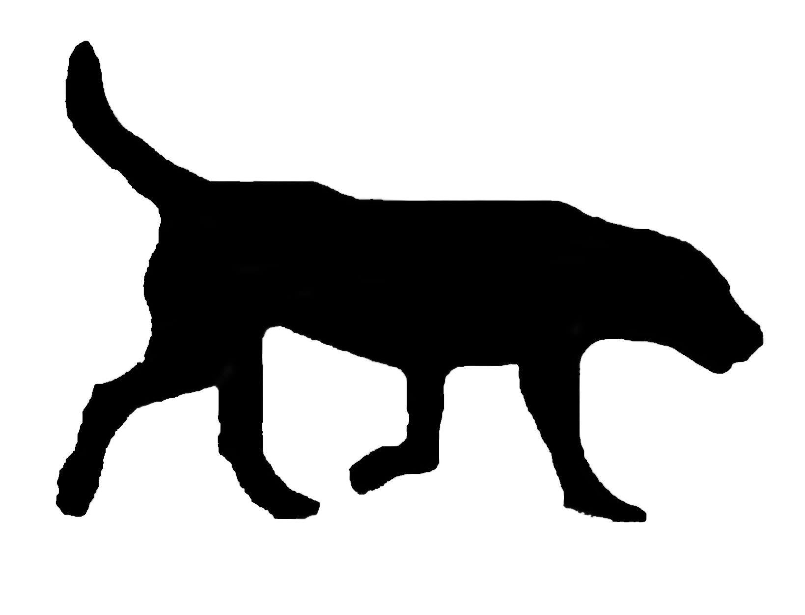 Ground Hog And Black Cat Photos