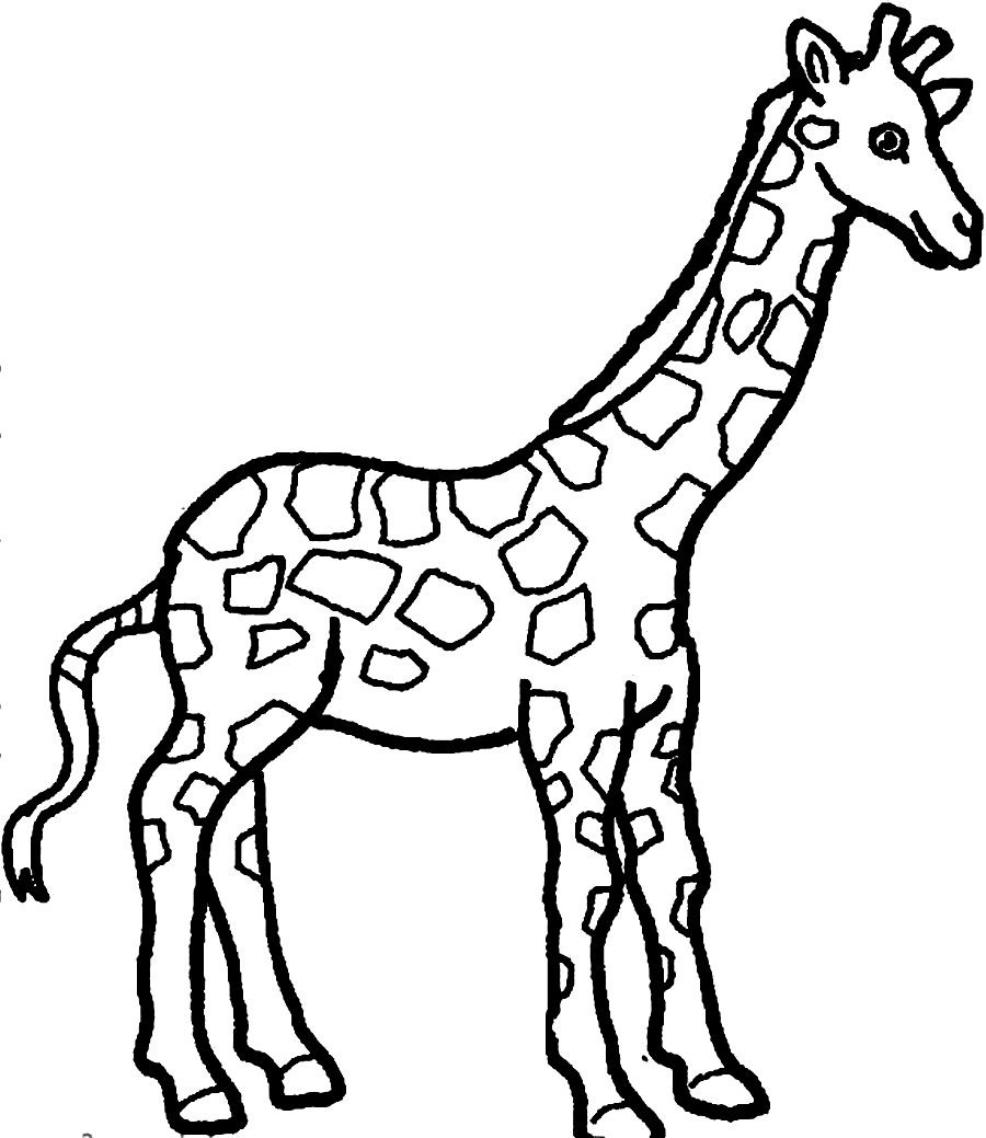Giraffe To Color Clipart Best