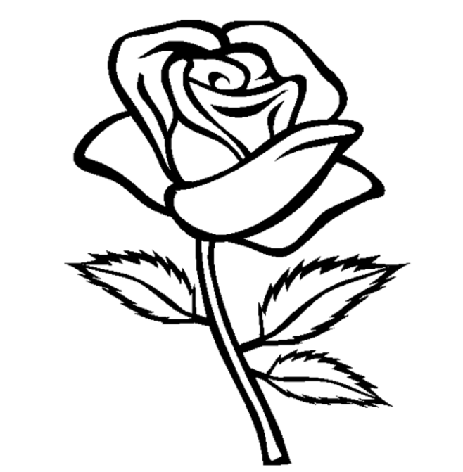 Line Drawing Of A Rose : Line drawing rose imgkid the image kid has it