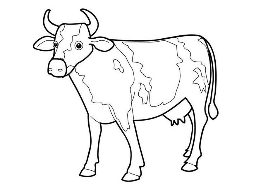 Picture Of Cow Outline