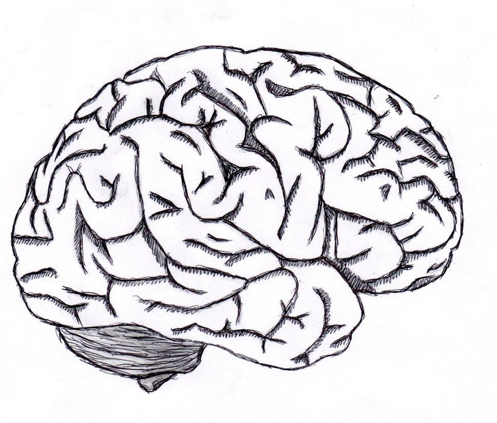 Brain Sketch - ClipArt Best