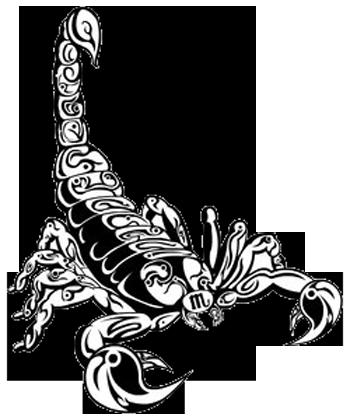 Scorpion Drawings Clipart Best