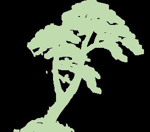 Rainforest Edit Md image - vector clip art online, royalty free ...: www.clipartbest.com/jungle-trees-cartoon