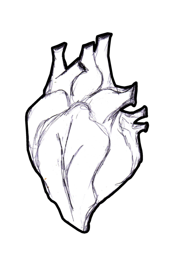 outline of a human heart