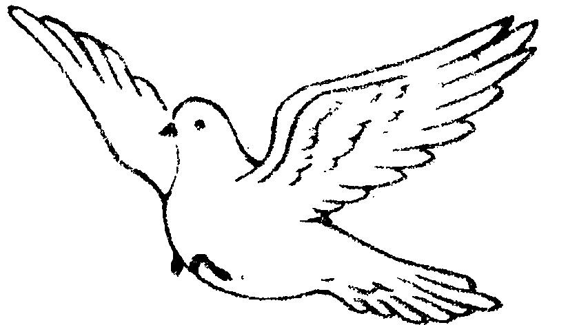 Dove bird clipart