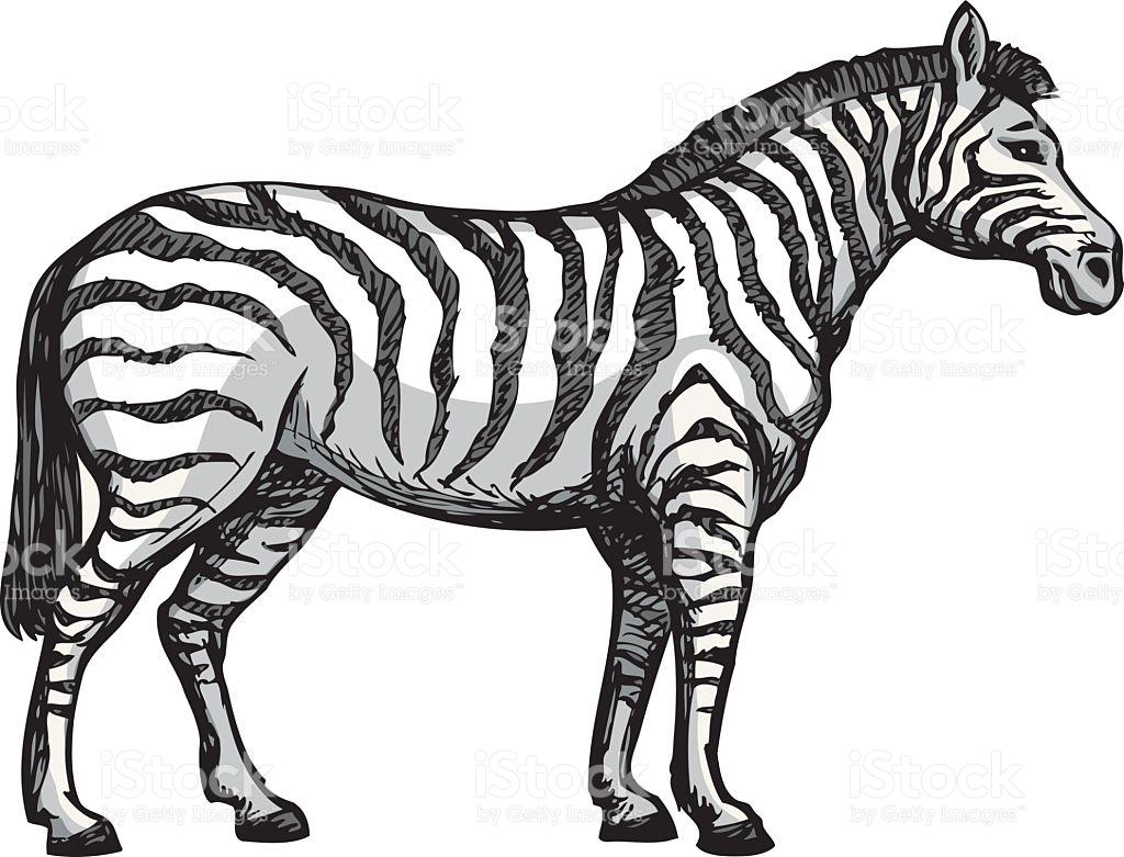 zebra drawing clipart best vector clip art free download vector clip art free download