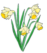 Daffodil CLIPART FREE - ClipArt Best