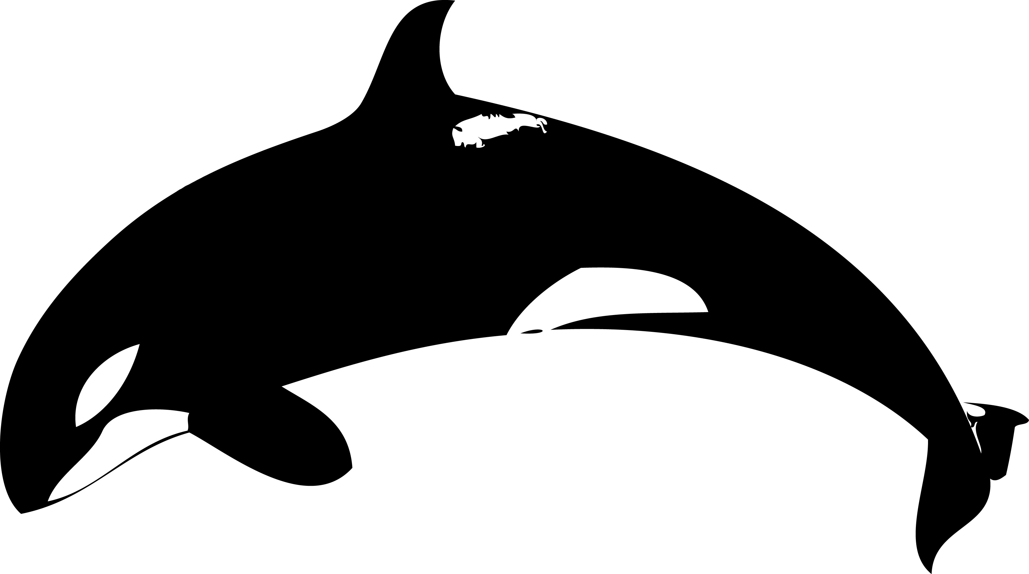 deviantART  More Like Time is running out   by  Orca Whale Cartoon