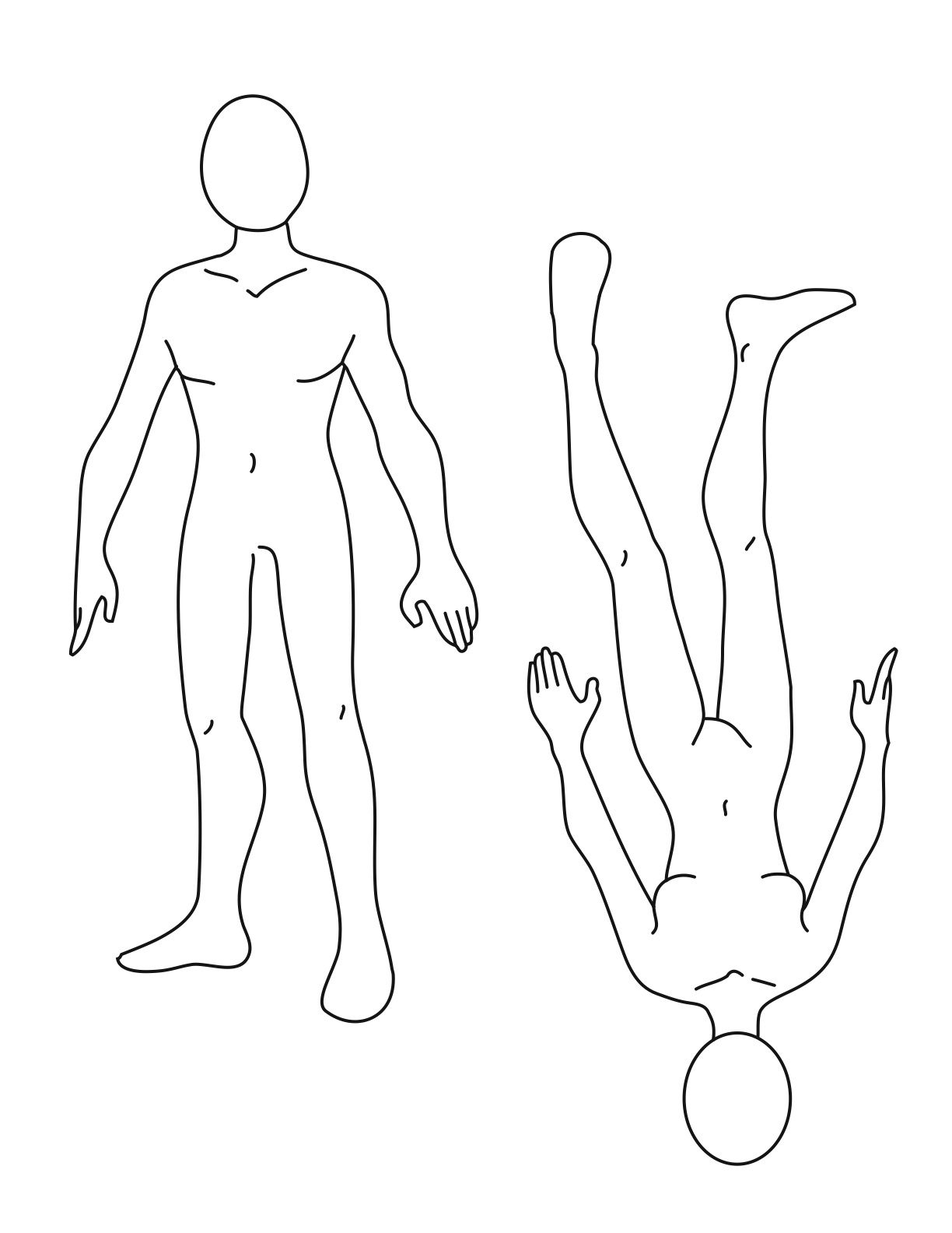 Body Template on fox diagram drawing