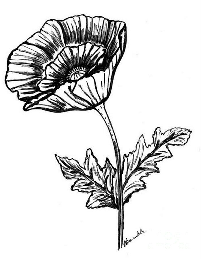 Poppy Line Drawing Tattoo : Poppy drawings clipart best