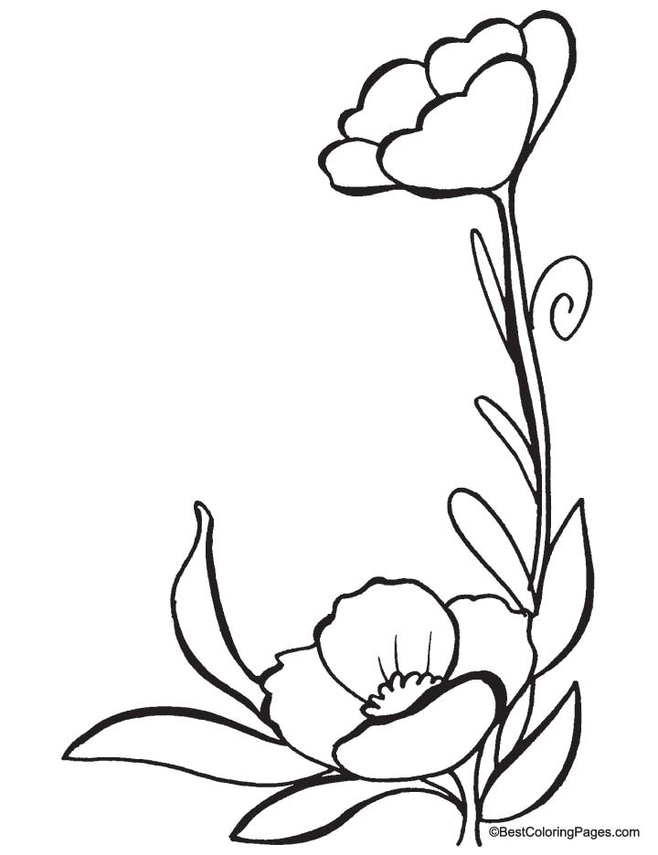 Poppy flower line drawing clipart best for Poppy coloring page
