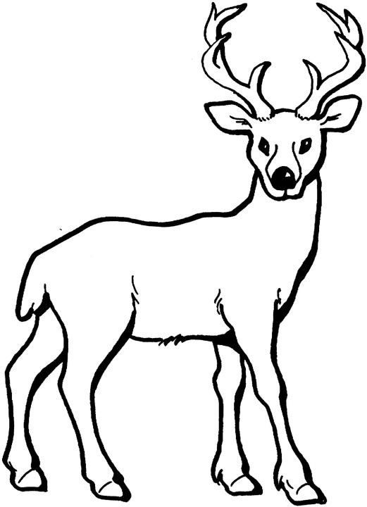 White Tail Deer coloring page | Free Printable Coloring Pages | 720x521