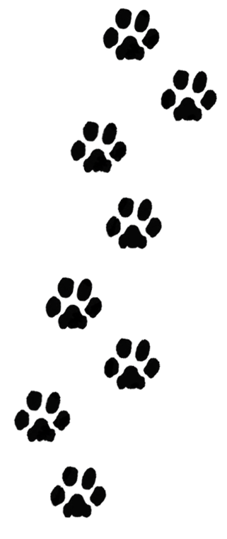 Paint For Dogs Paw Print