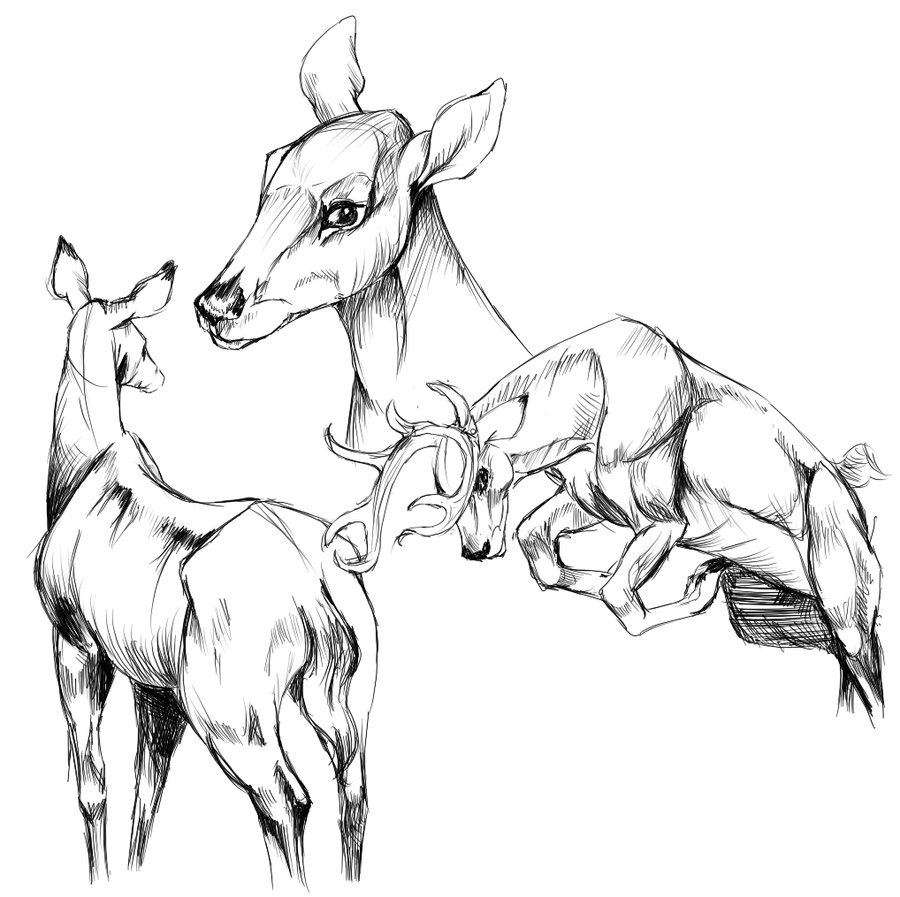 Deer Fight Drawing Images amp Pictures Becuo