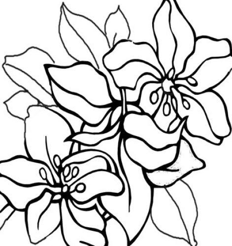 Dogwood Flower Clip Art ClipArt