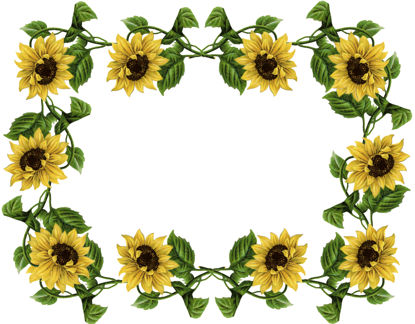 Sunflower Clipart Free Images