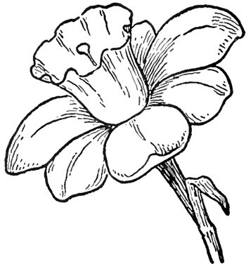 Drawing Of Flowers For Beginners - ClipArt Best