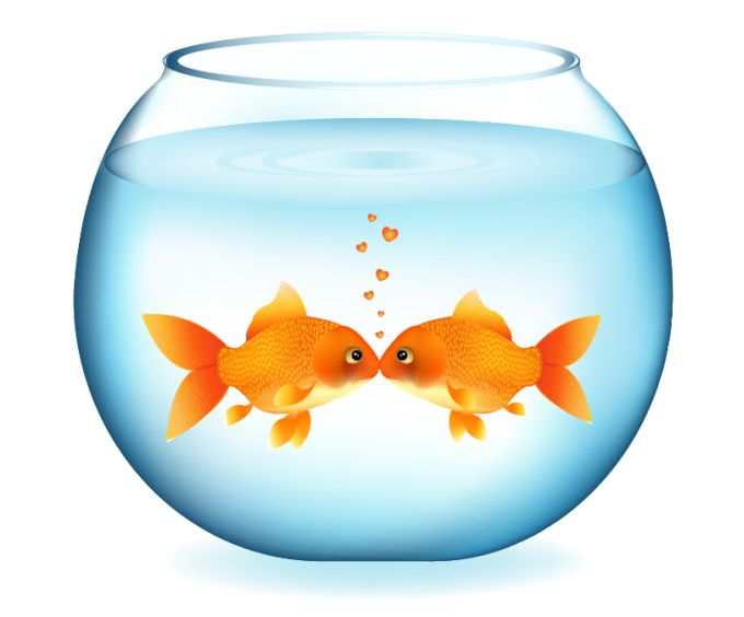 Fish in fishbowl clipart