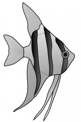 Angelfish black and white drawing - photo#14