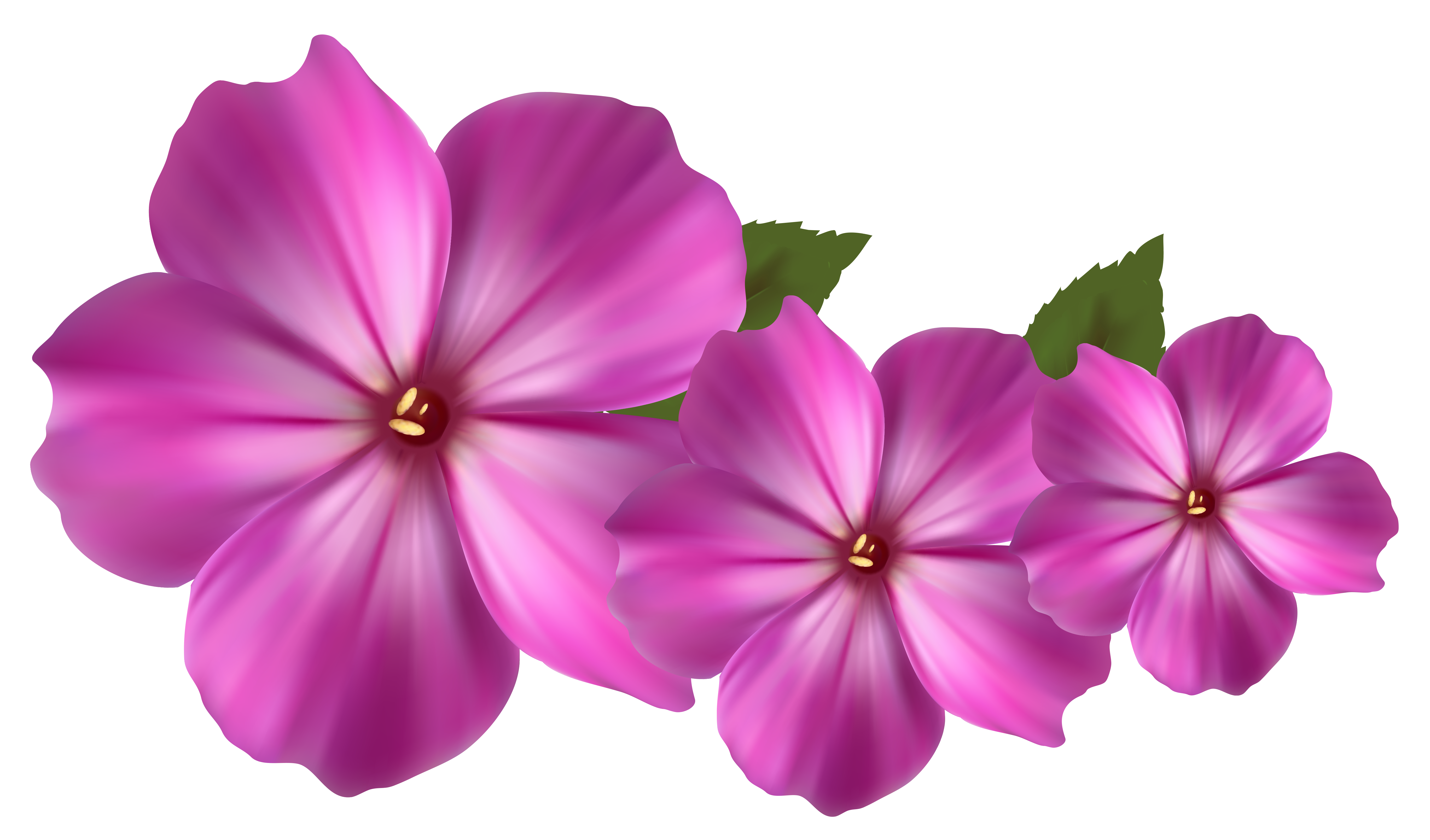 Real Flowers Png Flower Png - ClipArt B...