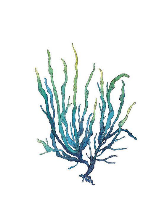 Line Drawing Kelp : Line drawing of seaweed clipart best