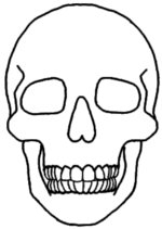 how to draw a skull side view