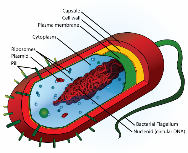 human cell clipart - photo #44