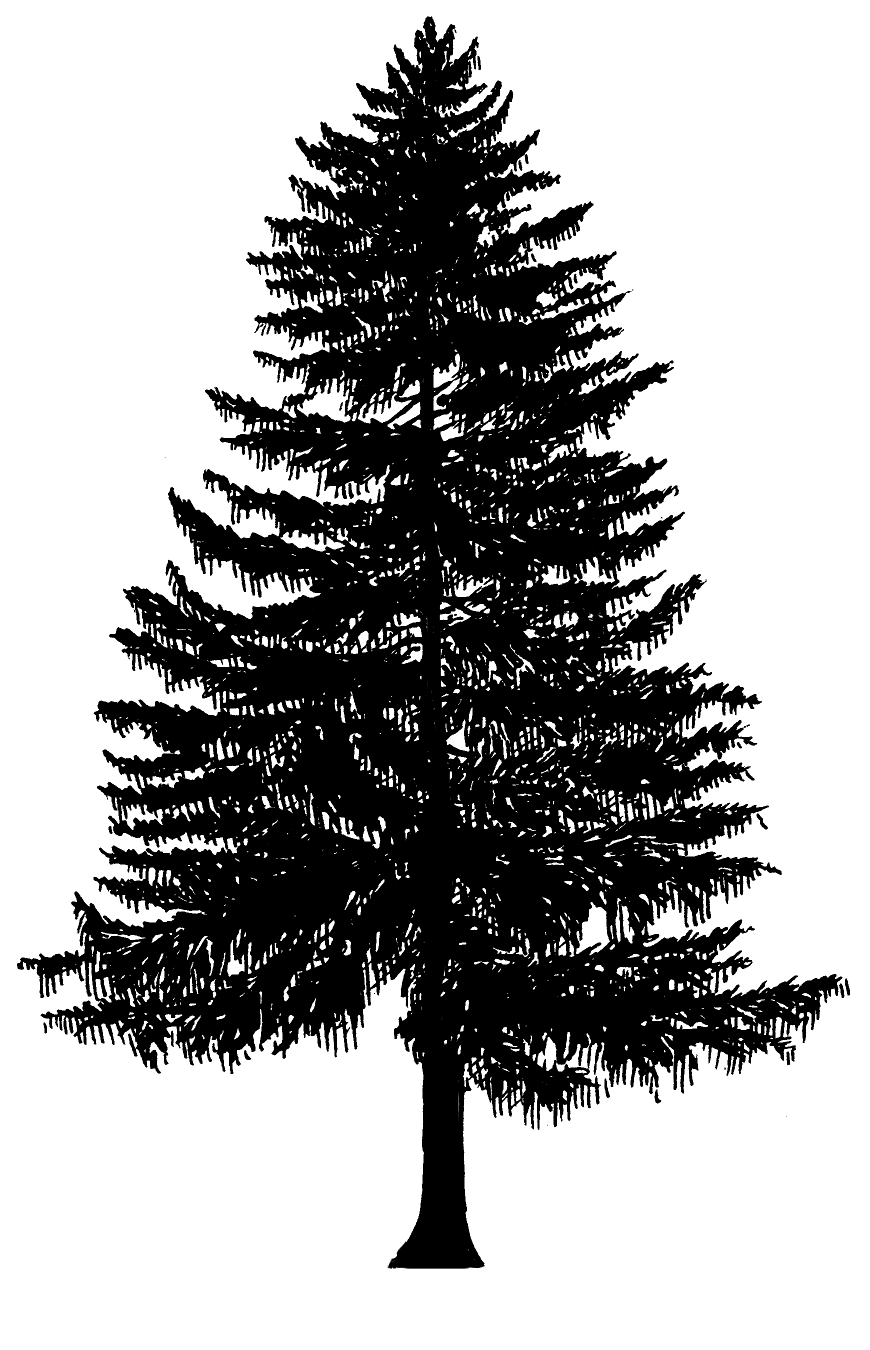 Silhouette Of Evergreen Tree - ClipArt Best