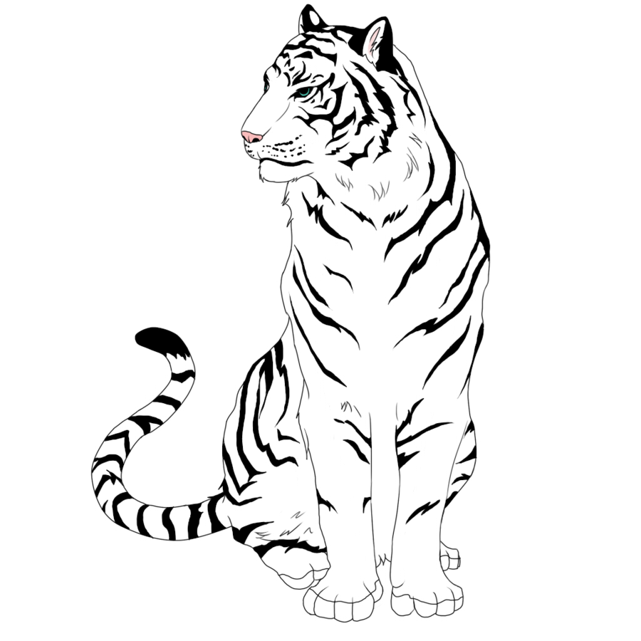 Easy To Draw White Tigers - ClipArt Best