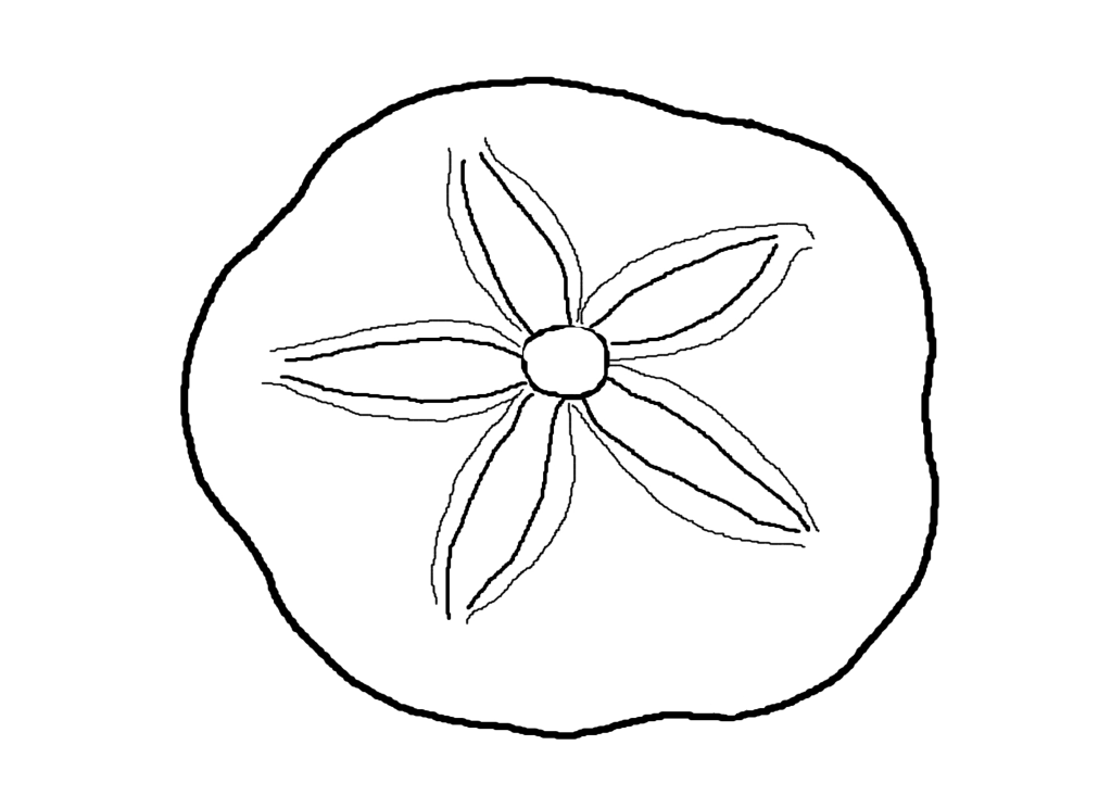 Seashell drawing clipart best for Coloring pages of seashells