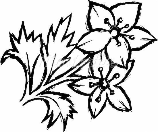 Cartoon black and white flowers clipart best for Drawings of cartoon flowers