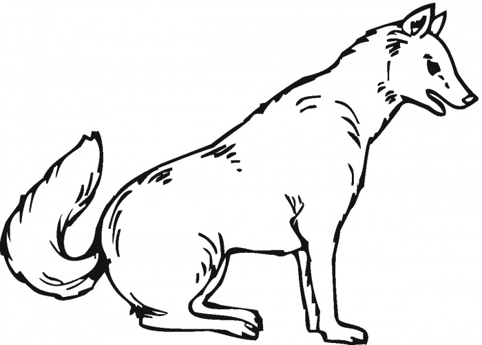 arctic wolf coloring pages - photo#16