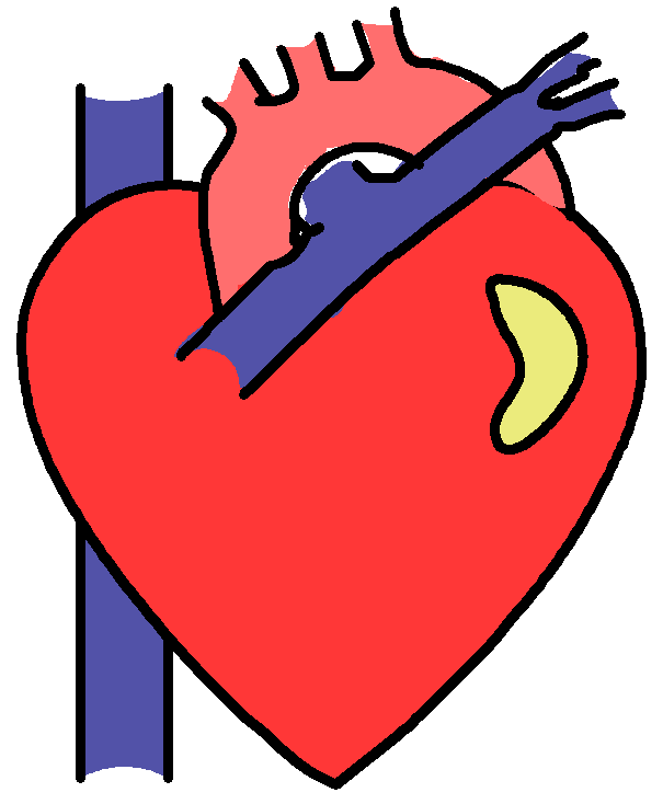 clipart of a human heart - photo #19