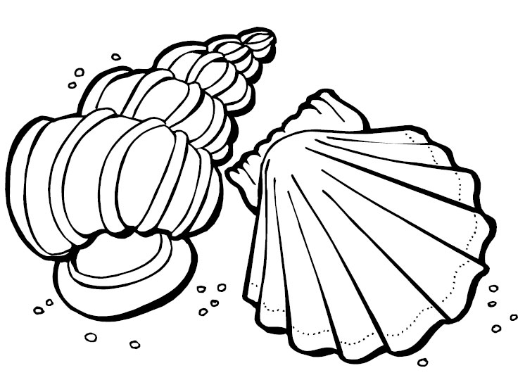 Sea shell drawings clipart best for Seashell coloring pages printable