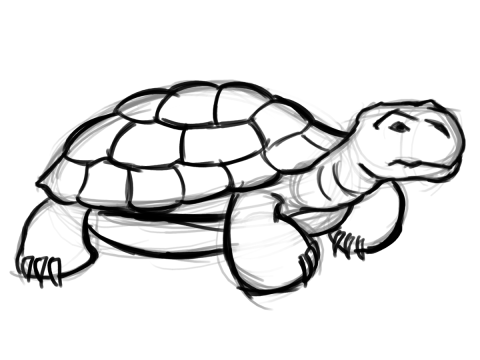 Tortoise Drawing Images Stock Photos amp Vectors  Shutterstock