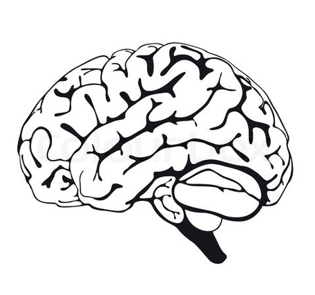 brain line drawing clipart best