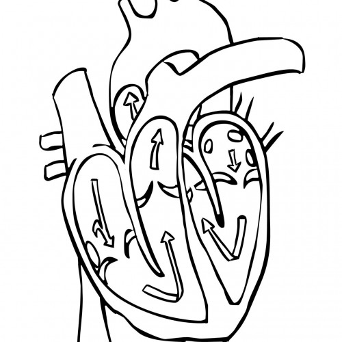 The Heart Blank Image