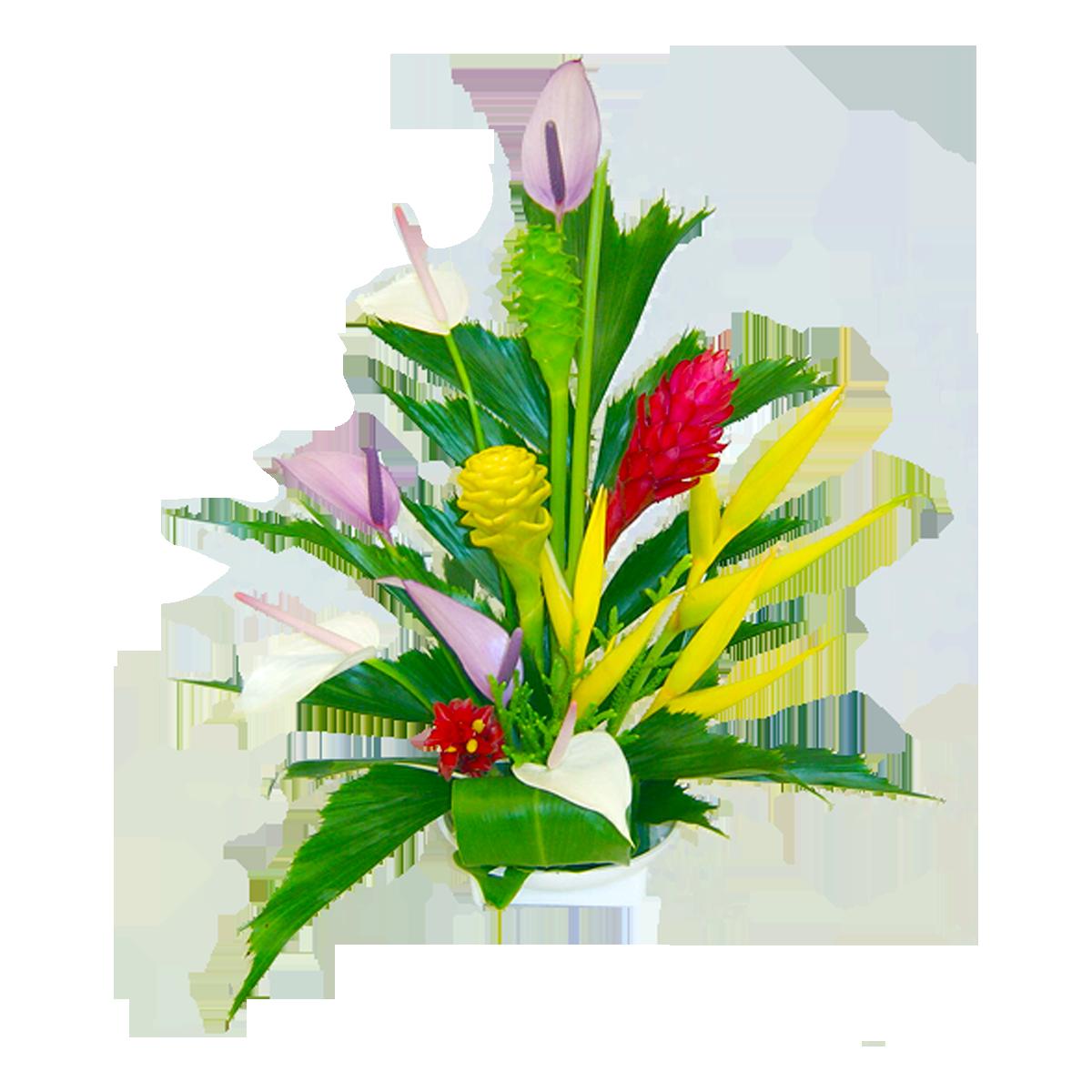 Tropical Flowers Png Kona Tropical Hawaiian Flowers