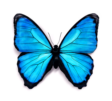 Blue butterfly drawings clipart best for How to make a butterfly drawing